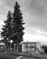 2 + (2 x 2) (Warren06) Tags: street trees blackandwhite bw building monochrome stairs composition balcony monotone monochromatic staircase evergreens housing railings talltrees