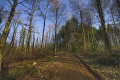 _DSC1581d8 (wdeck) Tags: freiburg frhling sdlichermooswald