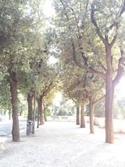 rome 2014 (CANDYTANGERINE) Tags: park trees rome sunny bin 2014