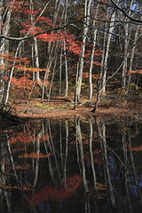 Tsuta-numa (r280labs) Tags: autumn fall leaves japan aomori     towada tsuta    tsutanuma
