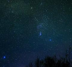 Geminid Meteor in Orion (Tej Dyal) Tags: shower orion dogwood 16mm meteor campsite geminid samyang