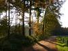 Light, shadows and some autumn colours (joeke pieters) Tags: autumn light holland fall netherlands forest woodland landscape licht woods herfst nederland larch bos achterhoek winterswijk landschap gelderland lariks bekendelle woold panasonicdmcfz150 1190124