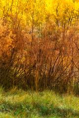 Layers of Alchemy (Sairam Sundaresan) Tags: california autumn color colour green fall colors closeup canon glow colours fineart foliage 5d canon5d sierras minimalism eastern sairam canon5dmarkiii 5dmarkiii sairamsundaresan