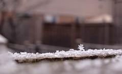 First Snowfall, Hamilton ON (christine.vdveen) Tags: snowflake snow macro focus hamilton perspective explore snowfall discover iphone hamiltonontario hamont iphone5 iphoneography liveauthentic newathis