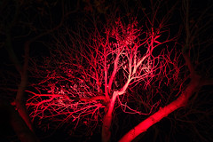 Red Tree (chrisar676) Tags: nightphotography trees red color colour tree rot colors night germany deutschland europa europe colours stuttgart nacht availablelight sony herbst bume baum farben nachtfotografie badenwrttemberg scityleuchtet stuttgartcityleuchtet sonydscrx100m3