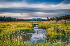 Tom Thomson, a pretty creek setting