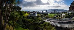Wellington City From Kelburn (buddythunder) Tags: city newzealand panorama distortion field track bend harbour nz wellington cablecar cbd cabbagetree botanicalgardens kelburn
