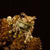 Milk Frog. (Yvette-) Tags: knowsleysafaripark nikkorf28105mm nikond5100
