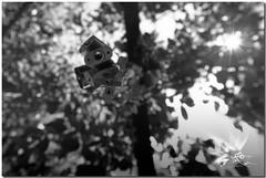 Candados de amor ( UfoSp@in  Slow ) Tags: plaza light portrait sky people espaa sun color art love luz sol apple colors architecture photoshop canon myself photography photo spain arquitectura agua europe exposure paint bokeh live infinity alien jardin colores ufo iso explore lugares 5d urbano 365 salamanca pueblos beatiful belleza spanien spagna topaz promesa 2014 candado arteurbano 1635l top20cloud photomatrix canon1635l canoneos5dmarkii photoshopcreativo 5dmarkii ufospain ufospin plazadelosbelgas