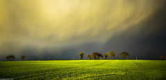 Passing by. (AlbOst) Tags: trees clouds skies stormy stormclouds lightandshade sunshineandshowers