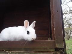 Emo bun (rjmiller1807) Tags: rabbit bunny emo didcot bun oxfordshire eyeliner rspca 2014 harwell rspcaoxfordshire