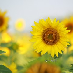 แสงรั่วจากด้านหลัง... วันอาทิตย์แล้ว พรุ่งนี้เริ่มงาน ================ โอ้รักกันหนอ  มาเถิดมารัก เป็นสุขยิ่งนัก  จะบอกให้รู้ ไม่รักใครอื่น  สุดจะชื่นชู โอ้รักกันหนอ ยอดรักยอดขวัญ  จงมั่นใจไว้ ให้คลั่งให้ไคล้  อย่าได้ตัดพ้อ รักฉันไงเล่า  จะเฝ้าพะนอ รักกันห