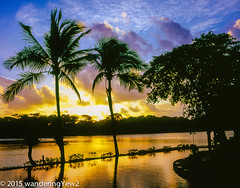 Tortuga Lodge: Sunrise Sequence #7 (wanderingYew2) Tags: reflection 120 mamiya film sunrise mediumformat geotagged costarica swimmingpool tortuguero filmscan mamiya7ii tortugalodgeandgardens wildernesstraveltour geo:lat=10571311192142993 geo:lon=8351917147636414