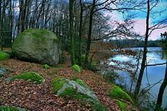 DSC_1437 (Hoenska) Tags: wood lake see wasser forrest steine fels pilze wald stein bume baum moos pilz felsen