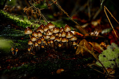 DSC_2609 (Russell Bruce Photography) Tags: life wood wild london nature mushroom rotting forest woodland photography photographer russell floor natural bruce north fungi fungus toadstool epping decaying d800 d800e russellbrucephotographynikon