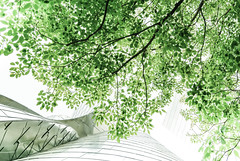 Flowing (Carrie McGann) Tags: tree architecture losangeles interesting nikon frankgehry dtla waltdisneyconcerthall 050516 theblueribbongarden