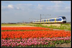 NSR-2648_Hil_04052016 (Dennis Koster) Tags: ns slt bollen trein nsr hillegom 2648 personentrein passagierstrein 6377hlmgvc