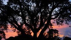 Sunset May 3rd. (Jim Mullhaupt) Tags: pictures camera pink blue sunset red wallpaper sky orange sun color tree weather silhouette yellow clouds landscape photography gold evening photo nikon flickr sundown florida dusk snapshot picture palm exotic p900 tropical coolpix bradenton endofday cloudsstormssunsetssunrises nikoncoolpixp900 coolpixp900 nikonp900 jimmullhaupt