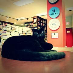 09 may 16 (12)a (beihouphotography) Tags: cats dusty cat square lawrence downtown 11 bookshelf kansas format x30 bookstores fujfilm