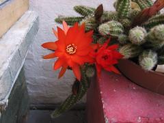 IMG_3027 (T.J. Jursky) Tags: cactus croatia canon tonkojursky dalmatia adriatic europe