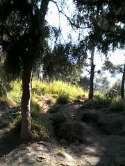 "Pengembaraan Sakuntala ank 26 Merbabu & Merapi 2014 • <a style=""font-size:0.8em;"" href=""http://www.flickr.com/photos/24767572@N00/27067765302/"" target=""_blank"">View on Flickr</a>"