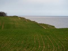 P4300121 (macg33zr) Tags: cliff field suffolk covehithe