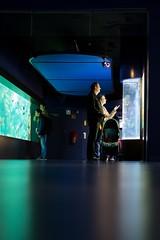 oceanopolis-5471 (STEPHANE COSTARD PHOTOGRAPHIE) Tags: ocean light black reflection aquarium brittany silhouettes bretagne peoples reflet brest parc serie tourisme finistre oceanopolis ratseyeview rasdusol