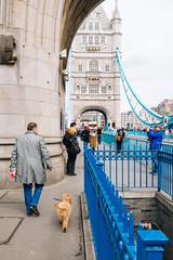 Walking the dog (lorenzoviolone) Tags: bridge england dog london tourism thames towerbridge walking unitedkingdom strangers streetphotography tourists southbank finepix fujifilm streetphoto fujiastia100f fav10 mirrorless vsco vscofilm streetphotocolor fujix100s x100s fujifilmx100s travel:uk=londonapr16