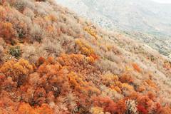 Robles (Matias Larenas Trucco) Tags: chile autumn trees red orange mountains trekking