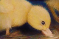 "Just Ducky ( 3"" x 5"" prisma  color pencil) (Artist Victoria Watson) Tags: art duck drawing wildlife duckling babyduck yellowduck duckdrawing handrendered prismadrawing"