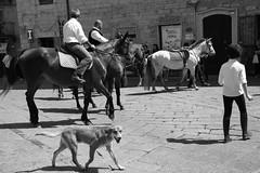 Tempio Pausania (Margcoss) Tags: dog cane cavalli