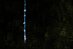 Loneliness (Mona_Oslo) Tags: blue green water oslo reflections river rope knots akerselva outdoos monajohansson