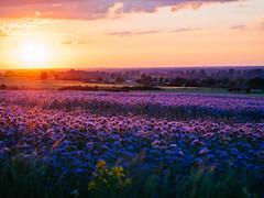 In a warm light II (Radek Fluder) Tags: light sunset landscape violet polska