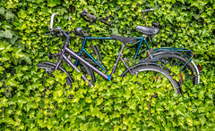 Back to nature (Juergen Huettel Photography) Tags: bicycle green nature leaves jhuettel