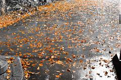... (azyef94) Tags: nature leaves forest photography rainyday natur rainy regen flickrnature sadworld prayforistanbul