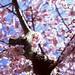 Beautiful blossom - part 1