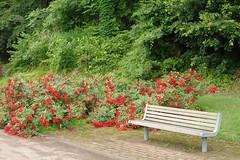 Higashisawa Rose Garden, Murayama, Yamagata, JP (kwjn10724) Tags: original japan photography photographers tumblr