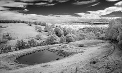 trafalgar-1885-ps-w (pw-pix) Tags: landscape dam paddocks cows cattle posts fence fences grass pasture trees clouds sky lookout tower viewfromlookout ir infrared 720nm infraredconvertednikon1v1 mirboonorthtrafalgarroad betweentrafalgarsouthandtrafalgar trafalgar southgippsland gippsland victoria australia peterwilliams pwpix wwwpwpixstudio pwpixstudio