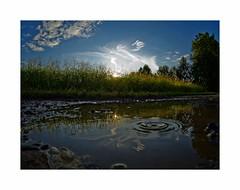 P7289149 (BUMBI61) Tags: splash pozzanghera puddle