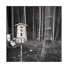 garden  kyoto, kansai  2015 (lem's) Tags: park sign japan rolleiflex garden kyoto jardin kansai parc japon panneau planar