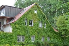 (diletta111) Tags: berlino city citt colors green verde foglie leaaves