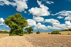 DSC_8053 (Adrian Royle) Tags: lincolnshire lincolnshirewolds walk outdoors rural agriculture landscape sky clouds tree land bimble nikon