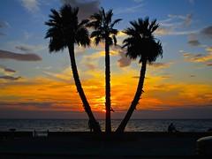 Cilento 3 palme al tramonto (52picchio) Tags: 2016 settembre canonixus155 campania canon castellabate cilento sunset sun santamariadicastellabate explore explored fluidr flickr flickrclickx flickrexsplored flickrnova