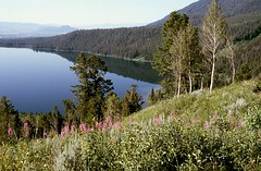 Phelps Lake (Daniel Biays) Tags: phelpslake lac paysage landscape parcnationaldegrandteton wyoming