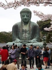 Kamakura | Great Buddha of Kotokuin (Toni Kaarttinen) Tags: japan  japonia    jap japonsko jaapan  japani japon xapn    japn jepang an tseapin giappone  japna japonija  japo  japonska japn hapon  japonya nht bn japanese kamakura formercapital hanami sakura cherryblossom cherryblossoms cherries temple shrine zen garden greatbuddhaofkotokuin kotokuin buddha