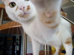 No pictures, please ( dieffe) Tags: animal cat chat italia piemonte gato gatto gatti animali animale moncalieri fauna