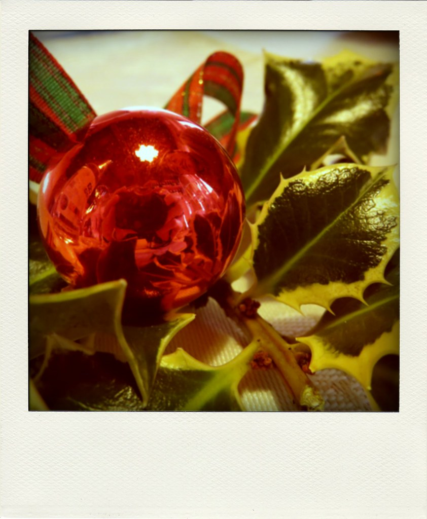 Pungitopo Decorazioni Natalizie.The World S Most Recently Posted Photos Of Natale And Pungitopo