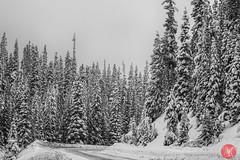 Mountain road (Kasia Sokulska (KasiaBasic)) Tags: trees winter snow canada mountains beauty landscape rockies alberta lakelouise banffnationalpark mountainroad