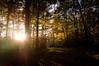 Autumn colors (Jos Mecklenfeld) Tags: autumn sunset fall netherlands colors forest walking zonsondergang outdoor hiking wandelen walk sony herbst herfst hike toamna groningen bos wald wandern nex 3n westerwolde sellingen sonynex nex3n sonynex3n
