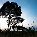 Sunset at Khao Yai National Park thumbnail